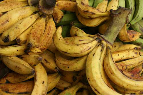 plantains - platano